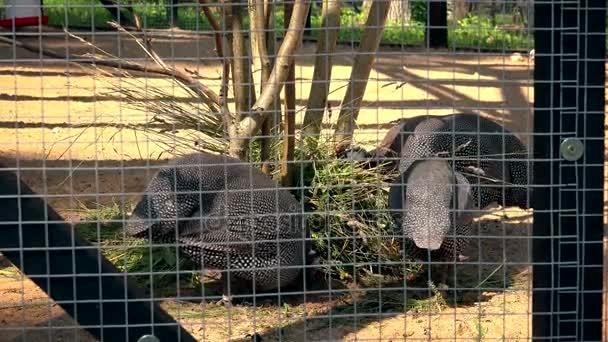 vzácné exotické ptactvo jíst v zoo klec