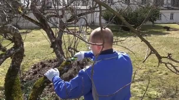 Zkušený zahradník, ořezávání větví jabloní v brzy na jaře. Ruka vystřelila
