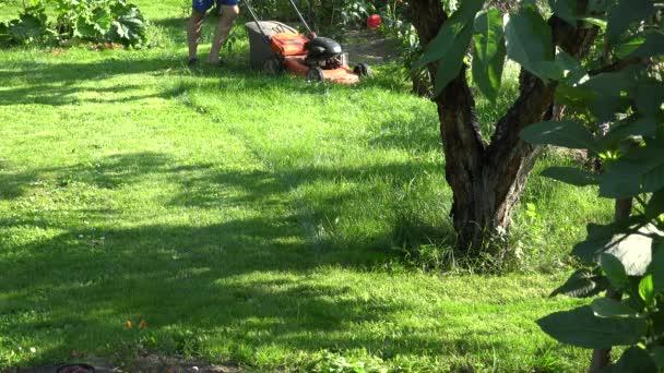 Hombre de paisajista entre flores y árboles frutales en patio jardín ...