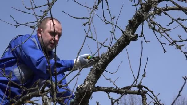 mladý muž prořezávat větve stromu apple na pozadí modré oblohy. 4k
