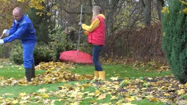 man woman rake autumnal leaves garden. Season work outdoor. 4K
