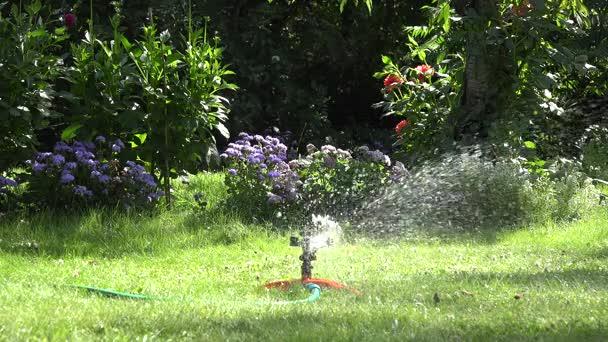Gartensprenger am sonnigen Tag, der grünen Rasen im Garten wässert. 4k