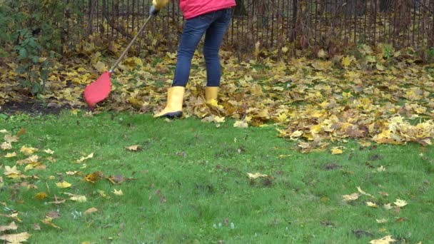 ženské hrábě suché podzimní listí hrábě na vlastní zahradě. 4k