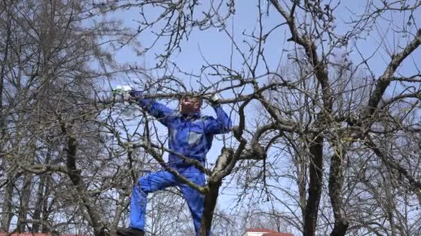 Mladý pěstitel muž prořezávání větví s nůžky vysoko na stromě na modré obloze