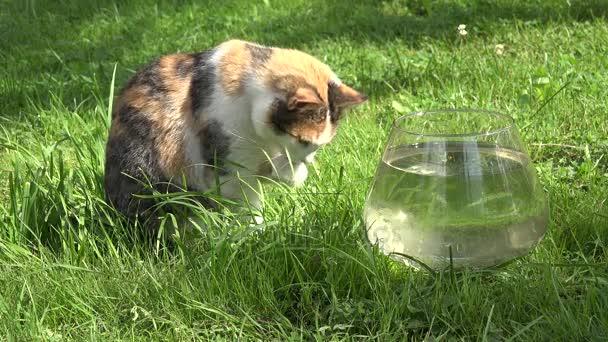 Tlustá mokrá kočička