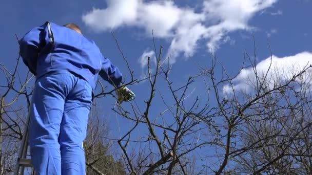 profesionální zahradník člověk pracovat s služba v jarní zahradě. 4k