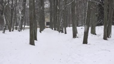 Lime tree alley in winter time and snow falling in park. Zoom in. 4K