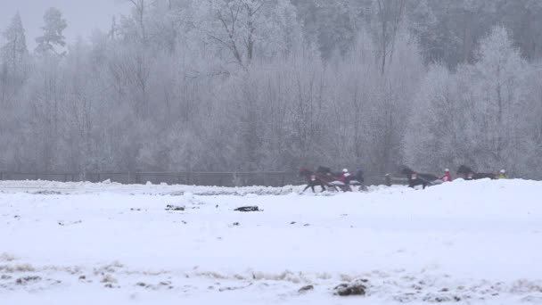 Fast running race horses with wheel cart rider on hippodrome in winter. 4K