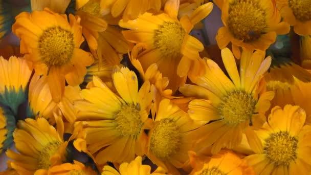 marigold rotating turntable clockwise shot. 4K
