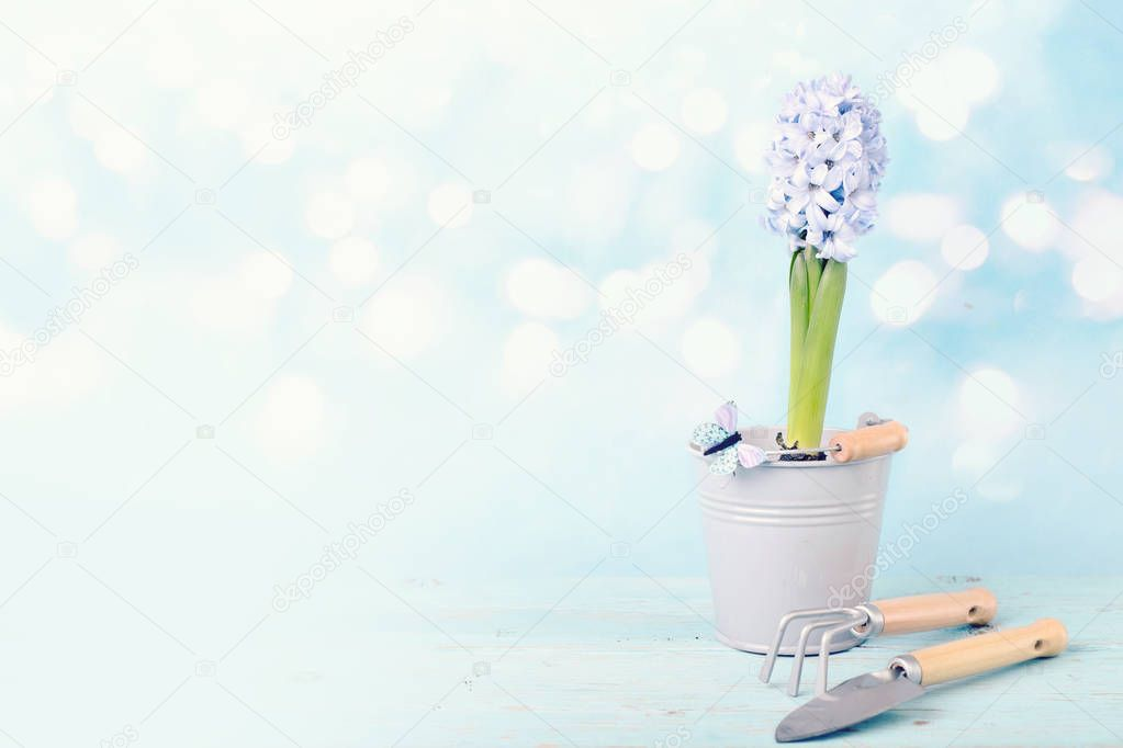 Gardening tools with plant on wooden background