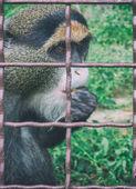 Affen im Zoo. Tiere in Gefangenschaft