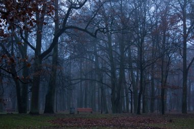 The end of October, the morning mist, the city of Gatchina, Leningrad region