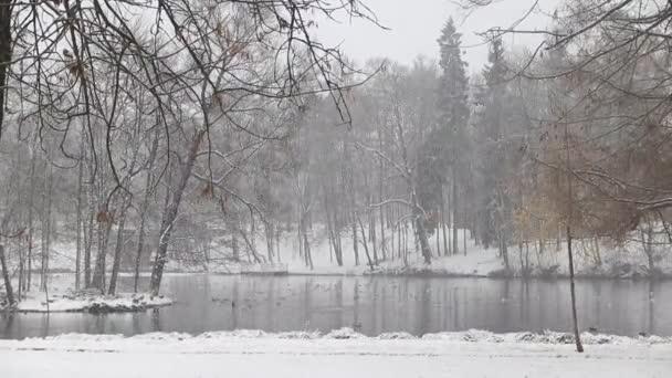 malebný výhled na jezero ve zasněženém zimním parku