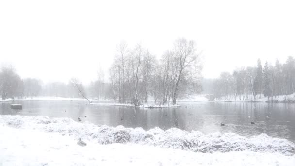 Zimní jezero, video