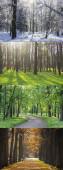Fotografie Collage-Fotos, alle Jahreszeiten. Winter, Frühling, Sommer, Herbst.