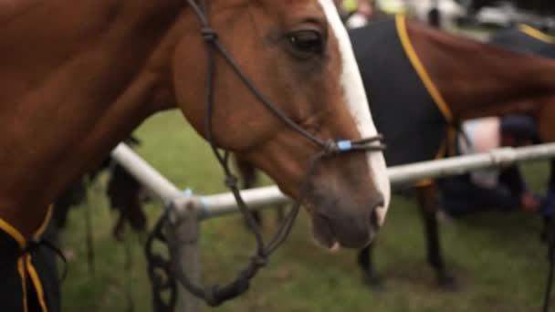 beautiful thoroughbred horse stallion
