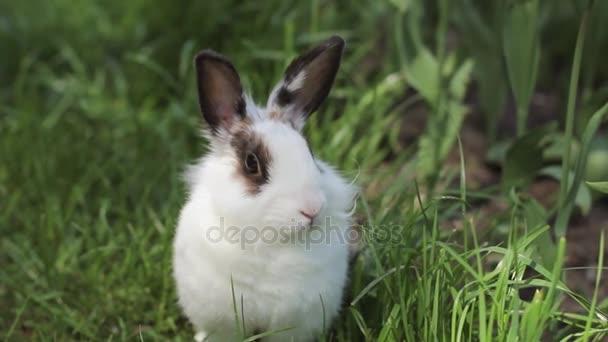 malý králík na zelené trávě v letním dni. Šedý králíček na sněhová vločka
