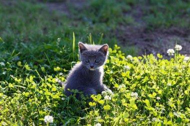 beautiful kitten playing on green grass background