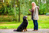 Fotografie Girl in autumn park training her dog in obedience