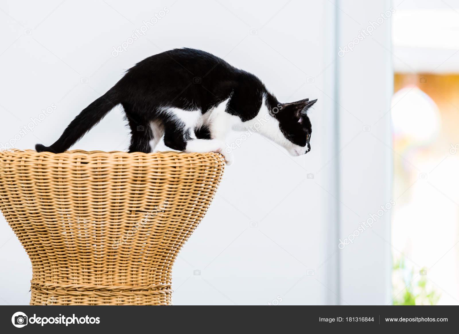 Gatto per saltare da sgabello in vimini u foto stock kzenon