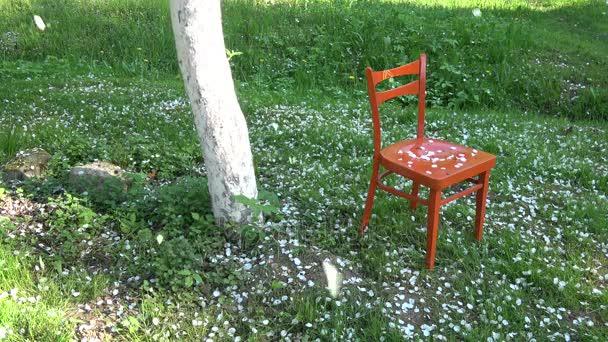 Bílá apple tree lístky, které spadají na jaře na červené dřevěné židle v zahradě