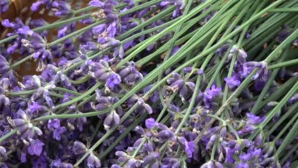 Bunch fresh lavender flowers in wicker basket on old wooden garden table background