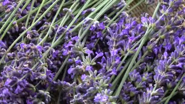 Rotating fresh beautiful lavender flowers background