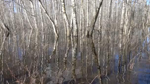 Pramenitá voda povodeň v březový háj