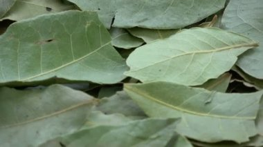 Rotating dry laurel leaves food spice background
