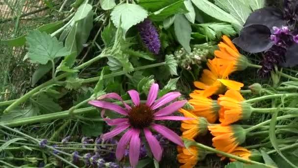 Rotující krásné čerstvé různé lékařské a koření bylinky květy pozadí. Měsíček, anýzu yzop, šalvěj, meduňka, levandule, bazalka, Třapatka