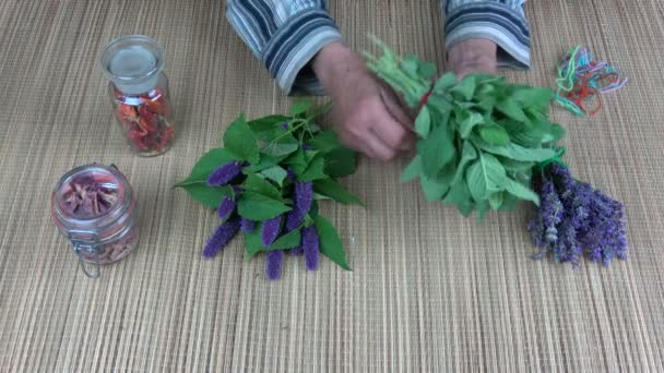 Senior woman herbalist binding fresh mint bunch for dry on table
