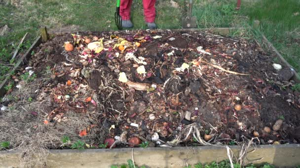 Gardener in early spring to dig compost heap soil