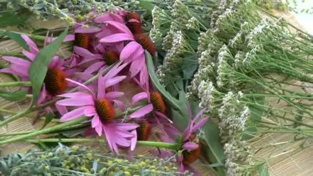 Otáčení různých čerstvých lékařských bylin pozadí. Echinacea, pelyněk, šíp a šalvěj