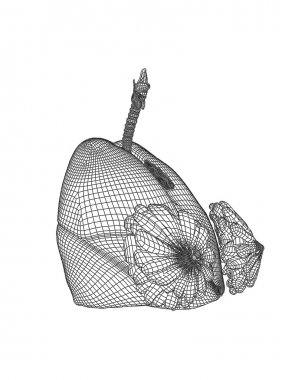 mesh respiratory system