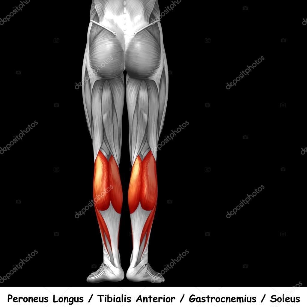 Parte inferior de la pierna en ingles