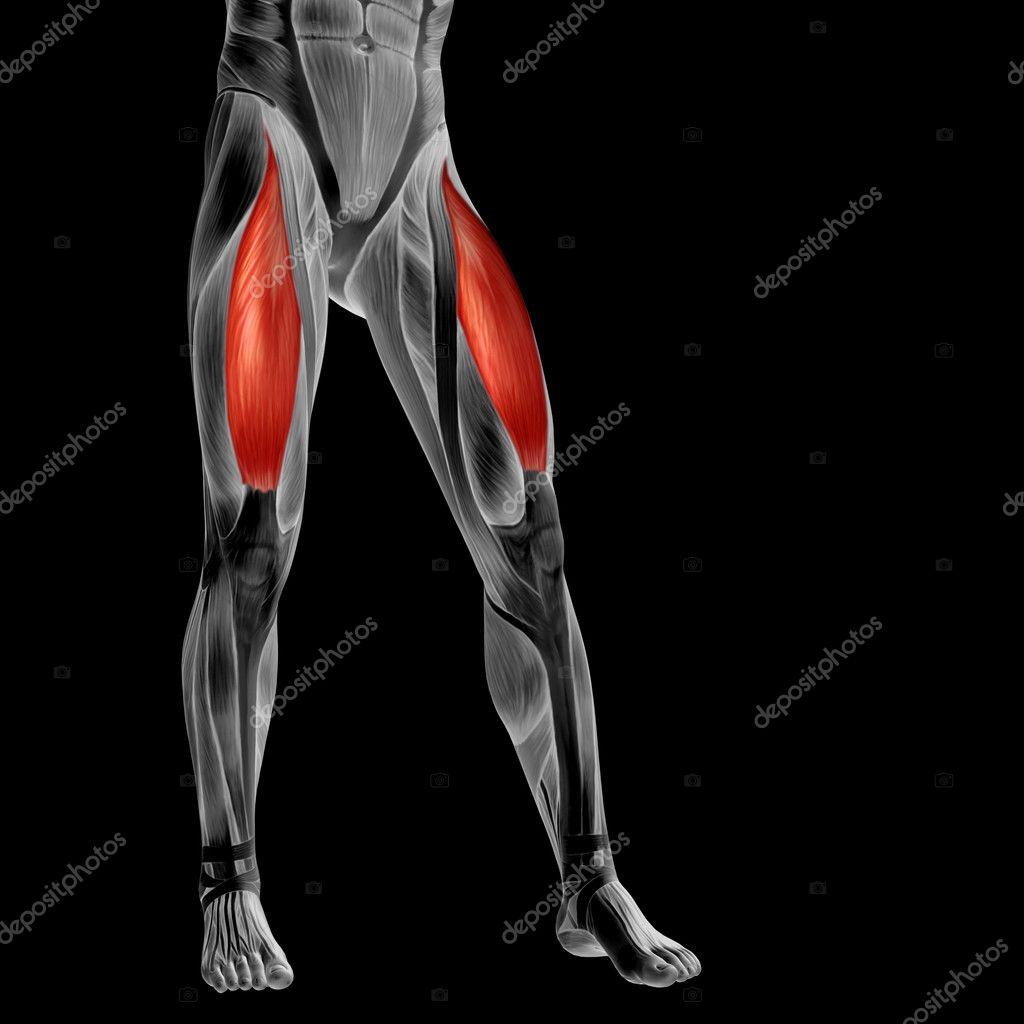 anatomía humana piernas superiores — Foto de stock © design36 #126566886
