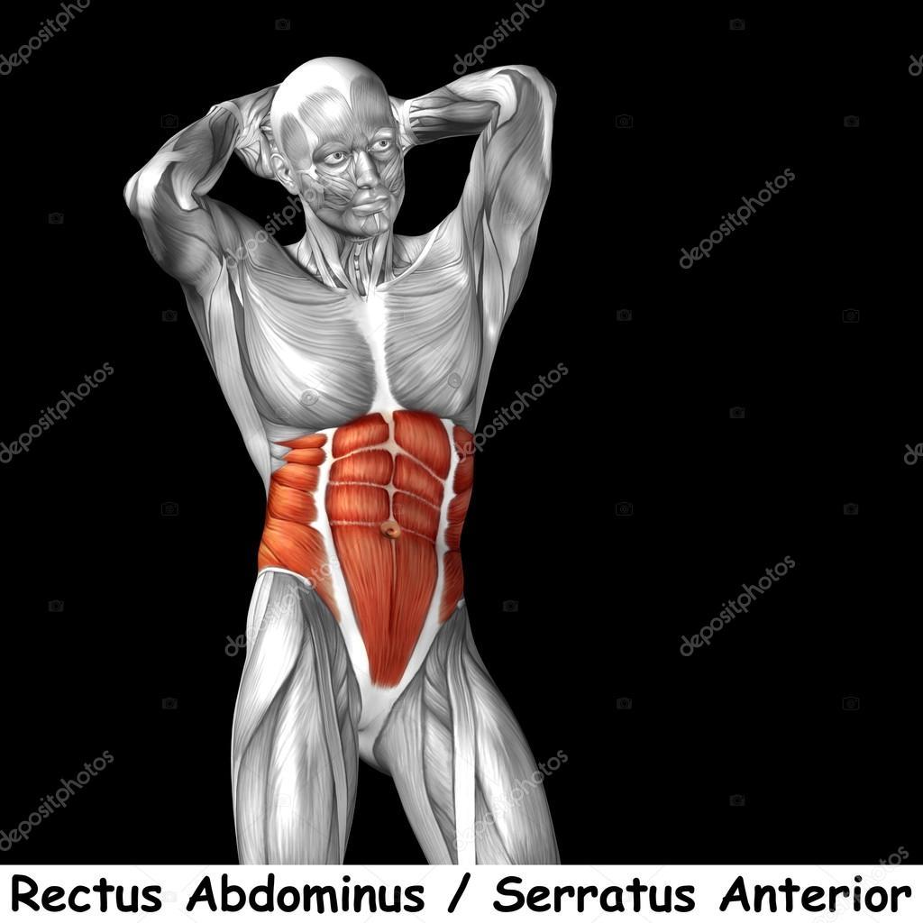 Anatomie der menschlichen Brust — Stockfoto © design36 #126573014
