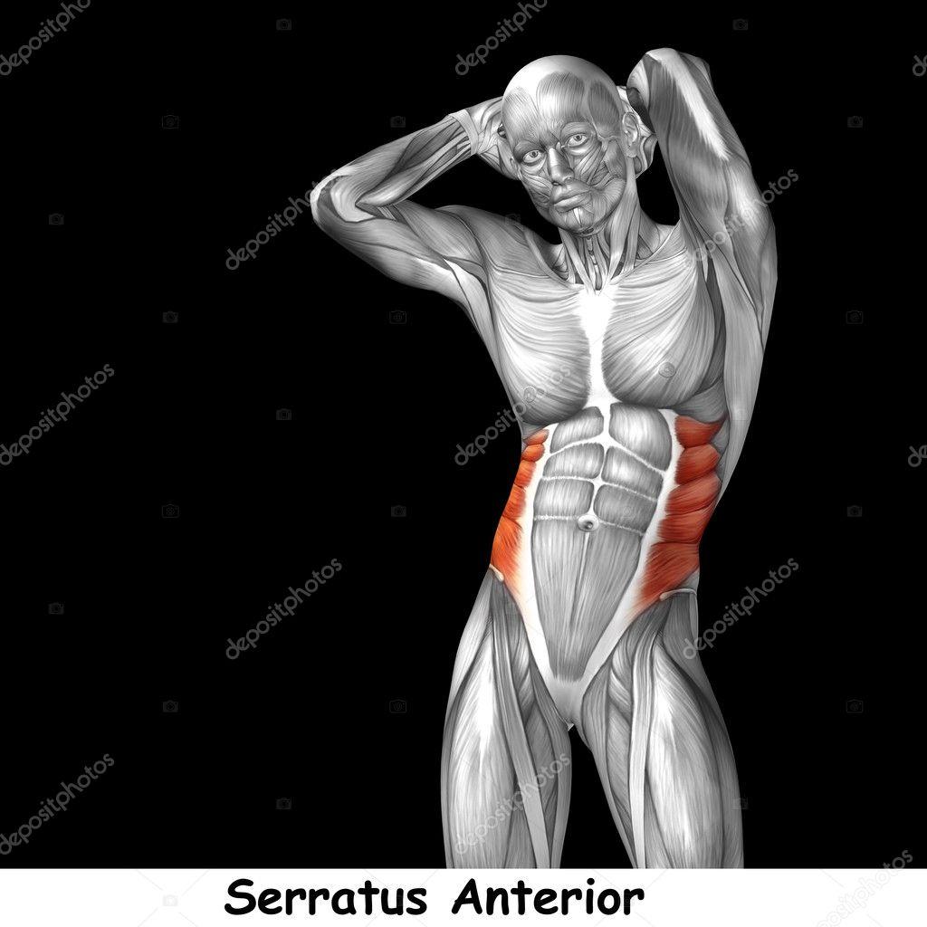 Fein Was Sind Die Menschlichen Körpersysteme Bilder - Physiologie ...