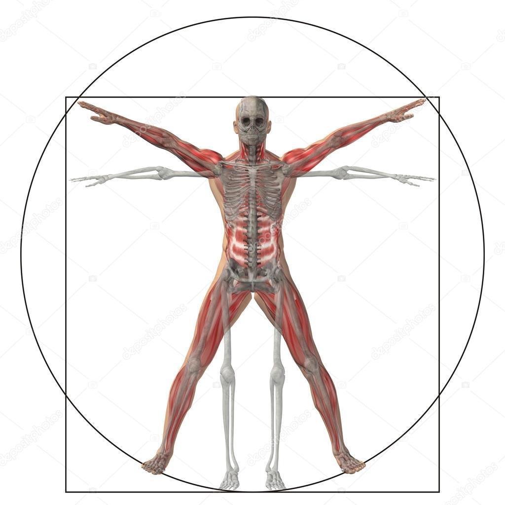 Anteil Anatomie Körper — Stockfoto © design36 #126574284