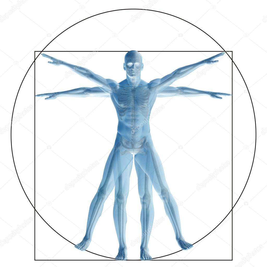 Anteil Anatomie Körper — Stockfoto © design36 #126584060