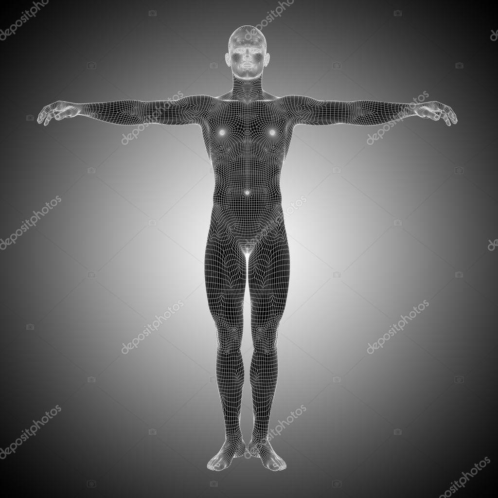 Anatomía humana masculina — Foto de stock © design36 #126585640