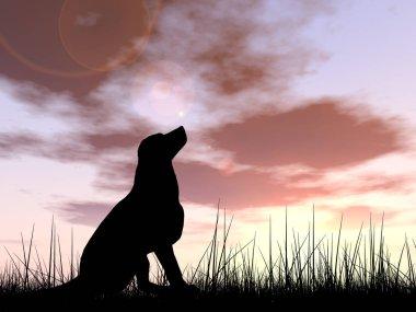 beautiful black cute dog silhouette