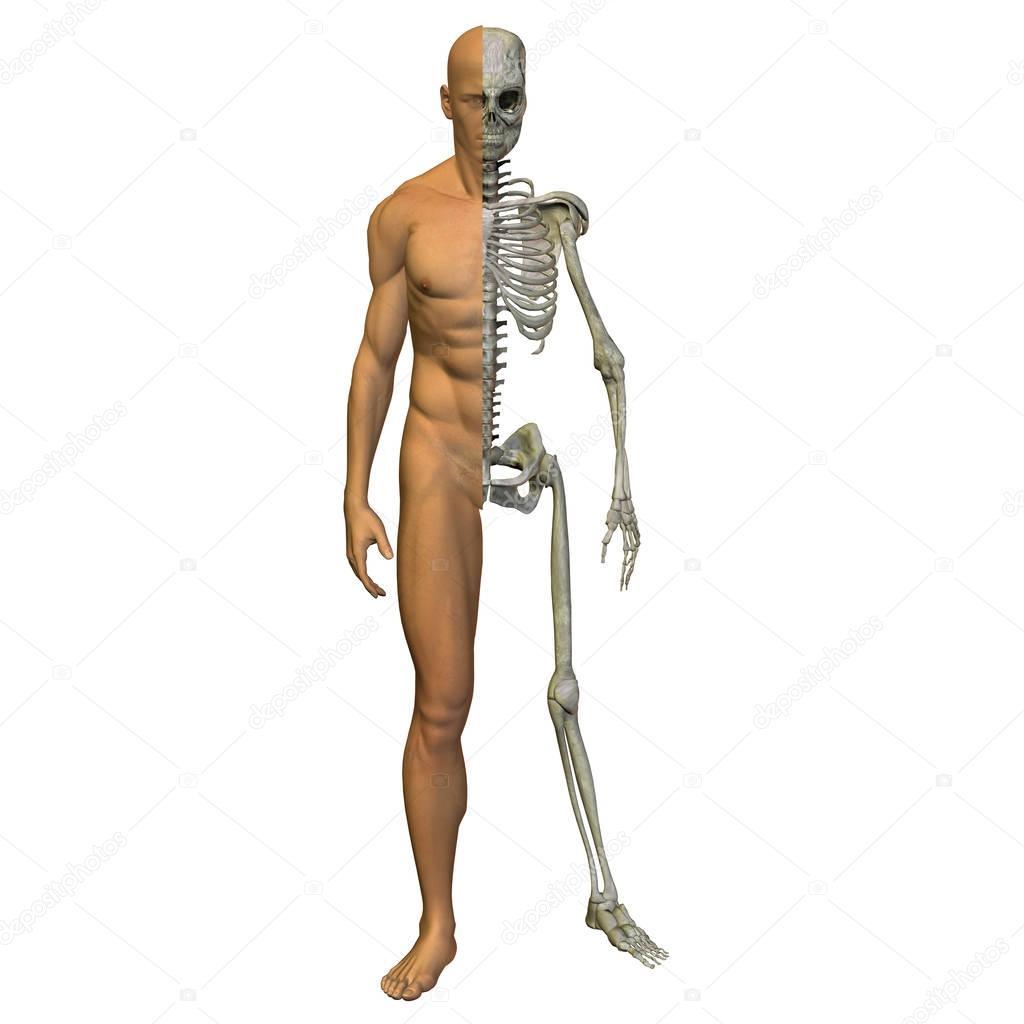anatomía humana hombre — Fotos de Stock © design36 #129333158