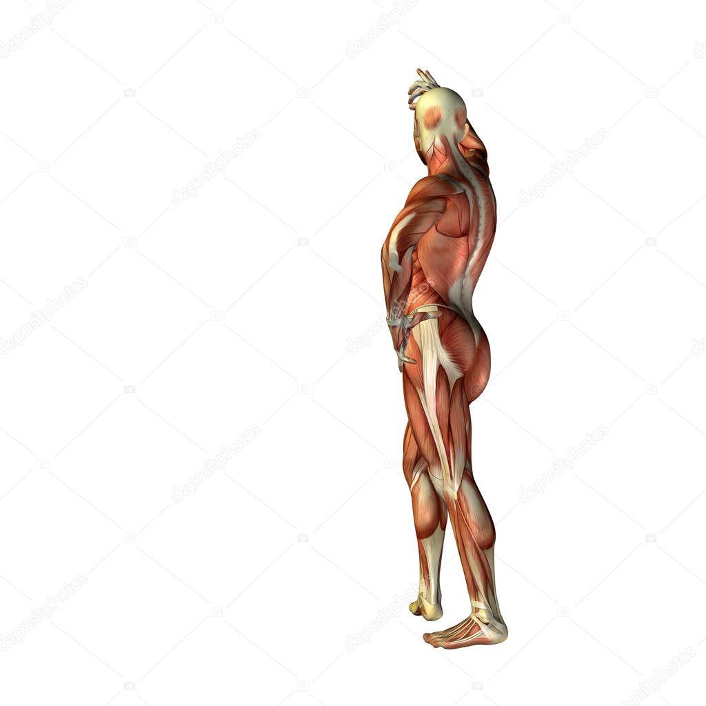 man met spieren voor anatomie ontwerpen — Stockfoto © design36 ...