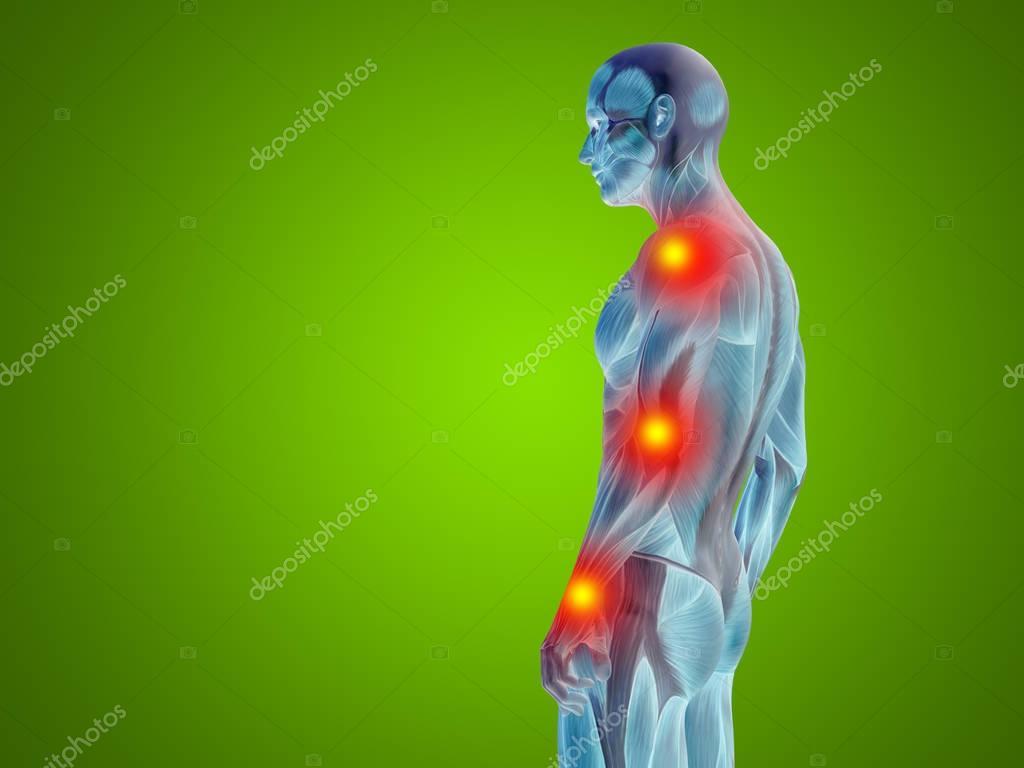Parte superior del cuerpo humano Anatomía — Foto de stock © design36 ...