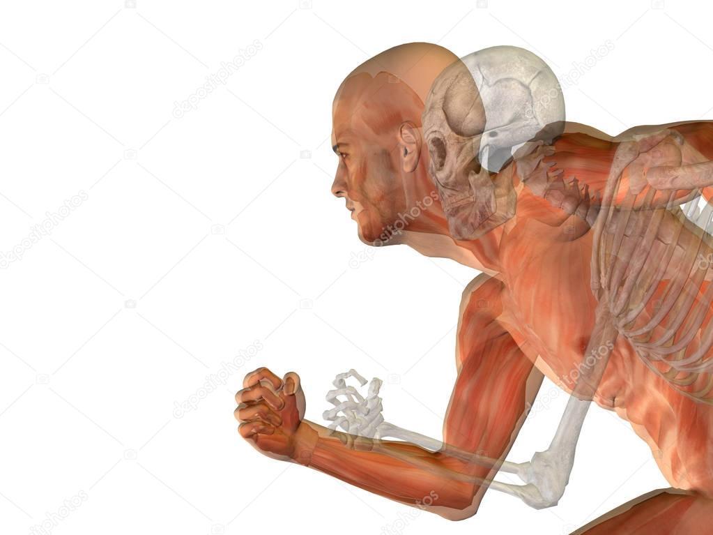 mann menschlich Anatomie — Stockfoto © design36 #129335278