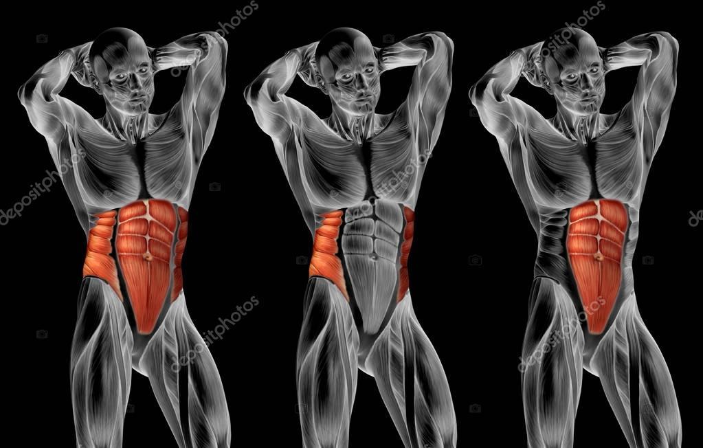 Chest Human Anatomy Stock Photo Design36 129336988