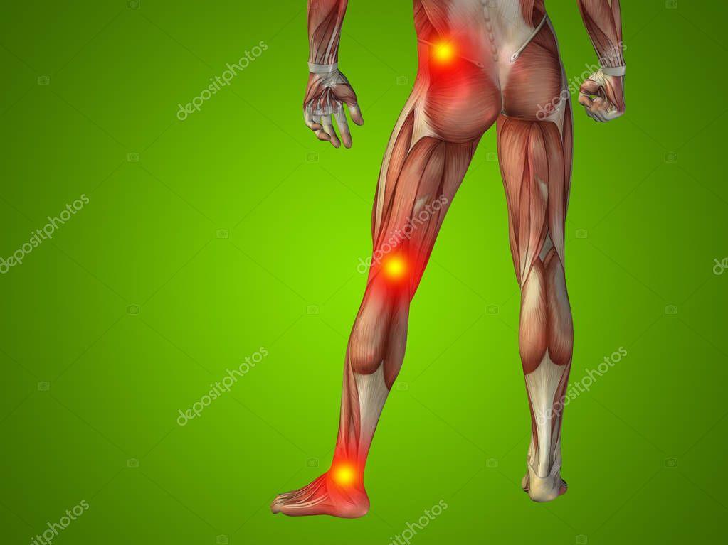 Mann menschlich Anatomie Unterkörper — Stockfoto © design36 #129337372