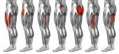 Emberi felső lábak anatómia