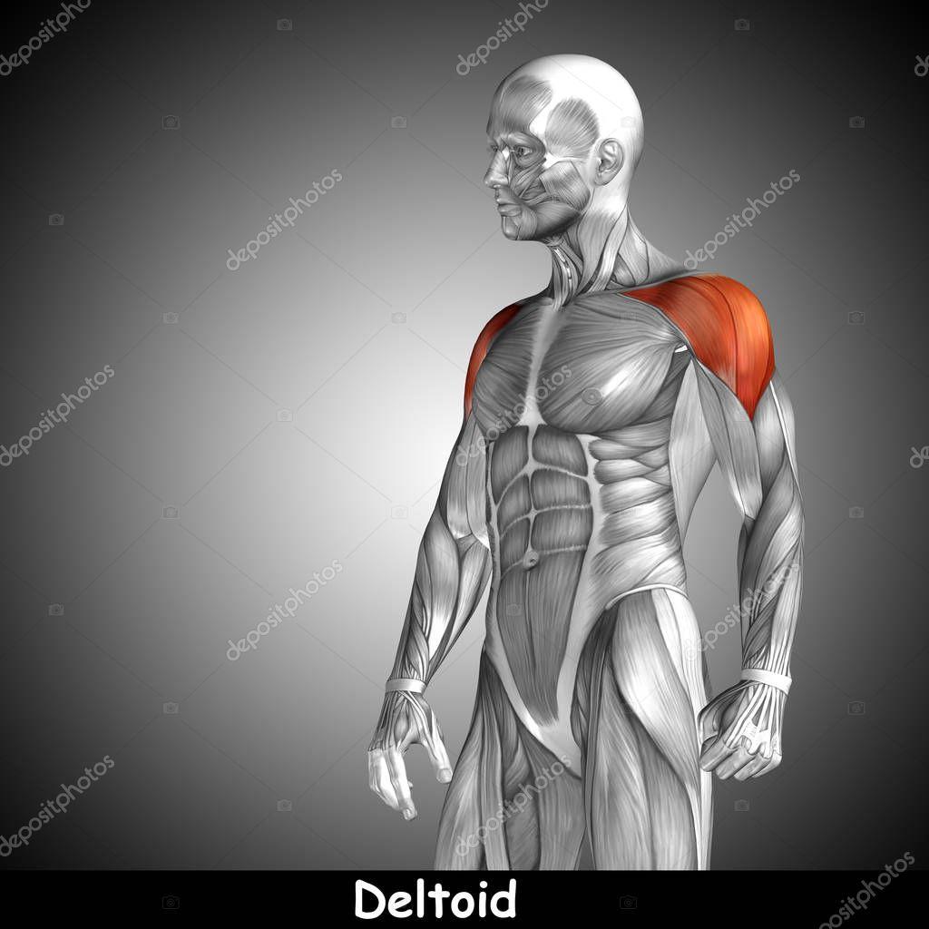 Menschliche Anatomie der Brust — Stockfoto © design36 #129340736